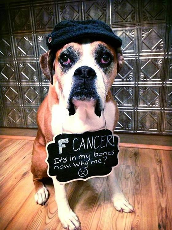 Terminally Ill Dog Fulfills Bucket List