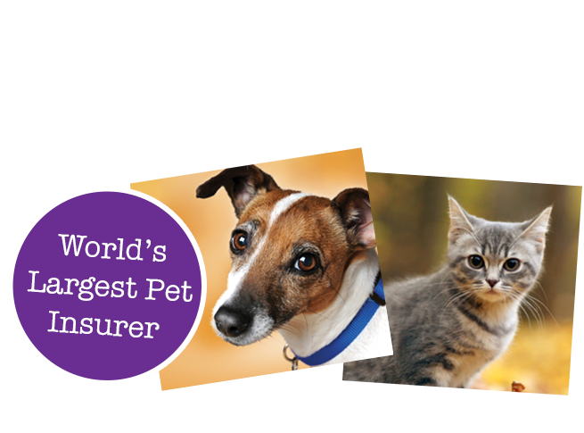Protect your pet with Petplan
