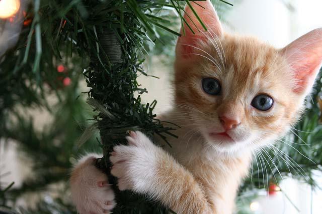 Kitten Christmas Tree