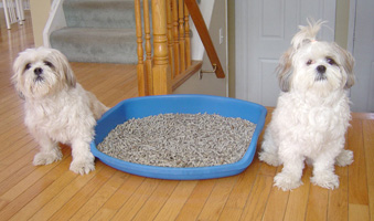 Dogs with litter box