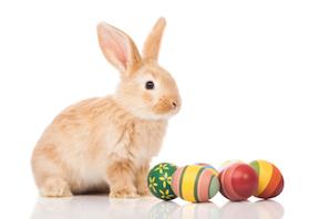 2013 - Mar 25 - Easter bunny