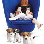 A BLUE  CHAIR  PETPLAN CHAIR 15