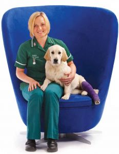 Blue Chair - Vet and Dog 3