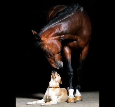 Dog and horse look in gat each other