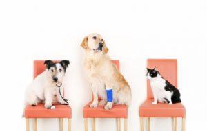 Pet_Insurance_Dog insurance petplan australia
