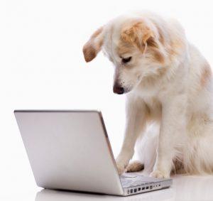 pet insurance cat insurance dog insurance petplan dog computer