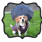 pet_insurance_winter_bailey_no_banner