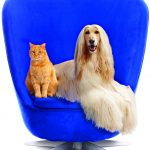 A-BLUE-CHAIR-PETPLAN-CHAIR-11