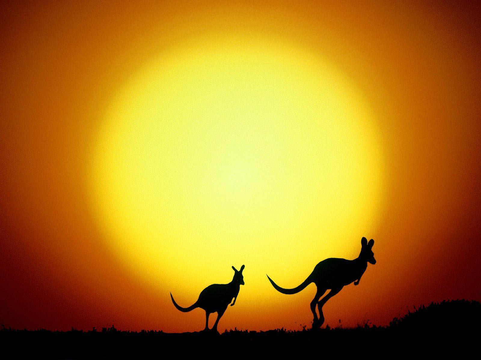 the-kangaroo-hop-australia-wallpaper-1 «