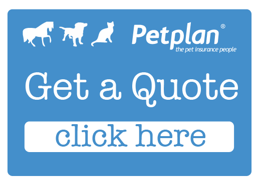 Dog Insurance Quote Form Petplan Interesting A Quote