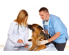 Vet Treating Dog with Nurse PPPRO