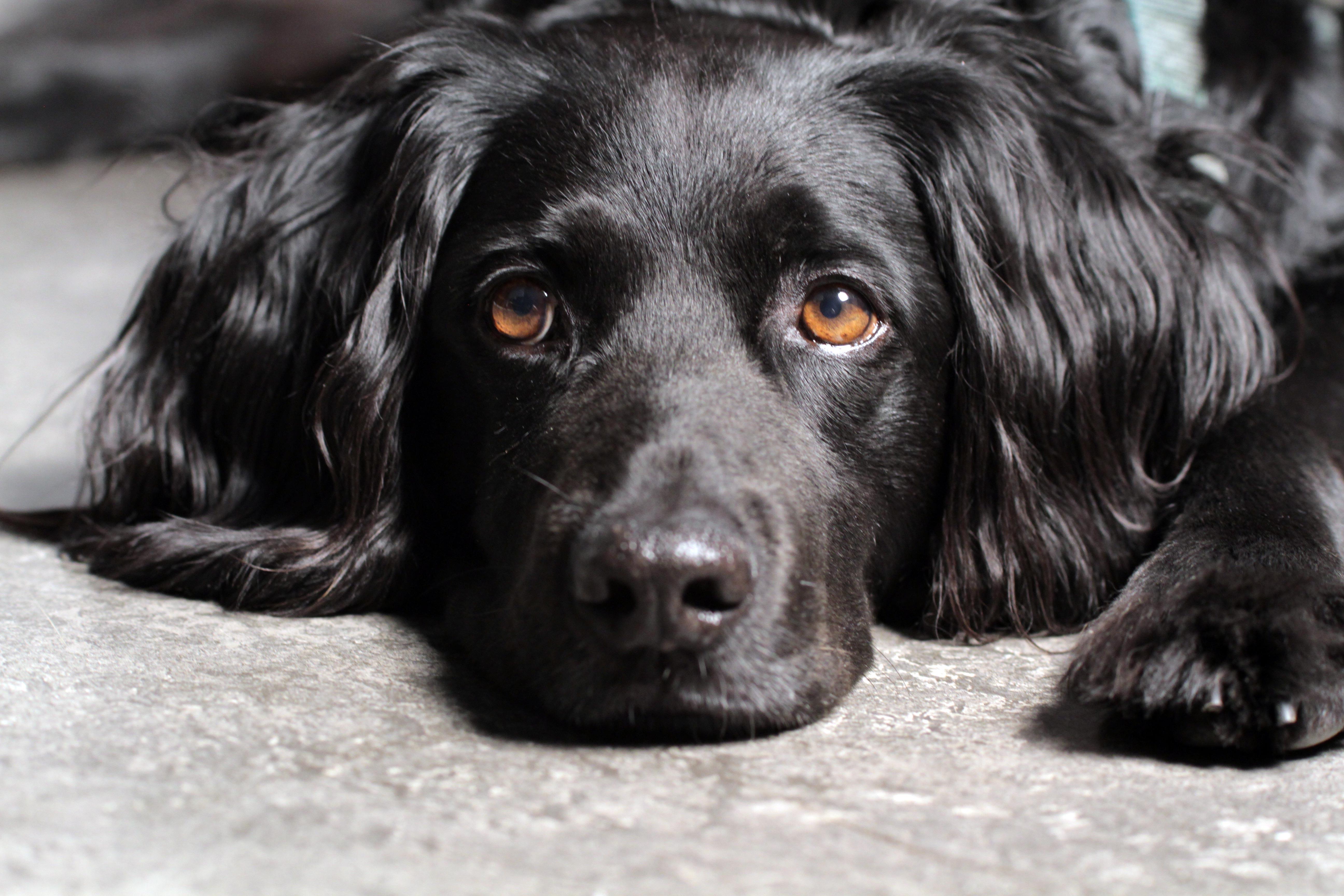 Black Dog Petplan Blog