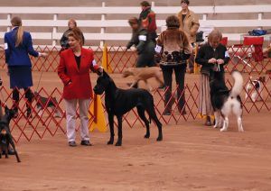 AKC Dog Show