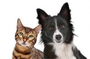 Benefits Of Pet Insurance Petplan Blog