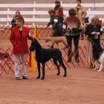 show ring