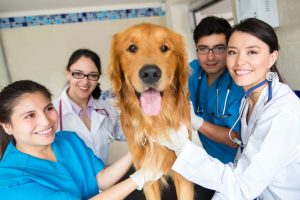 Dog with vet staff