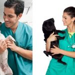 Veterinary taking care of pet