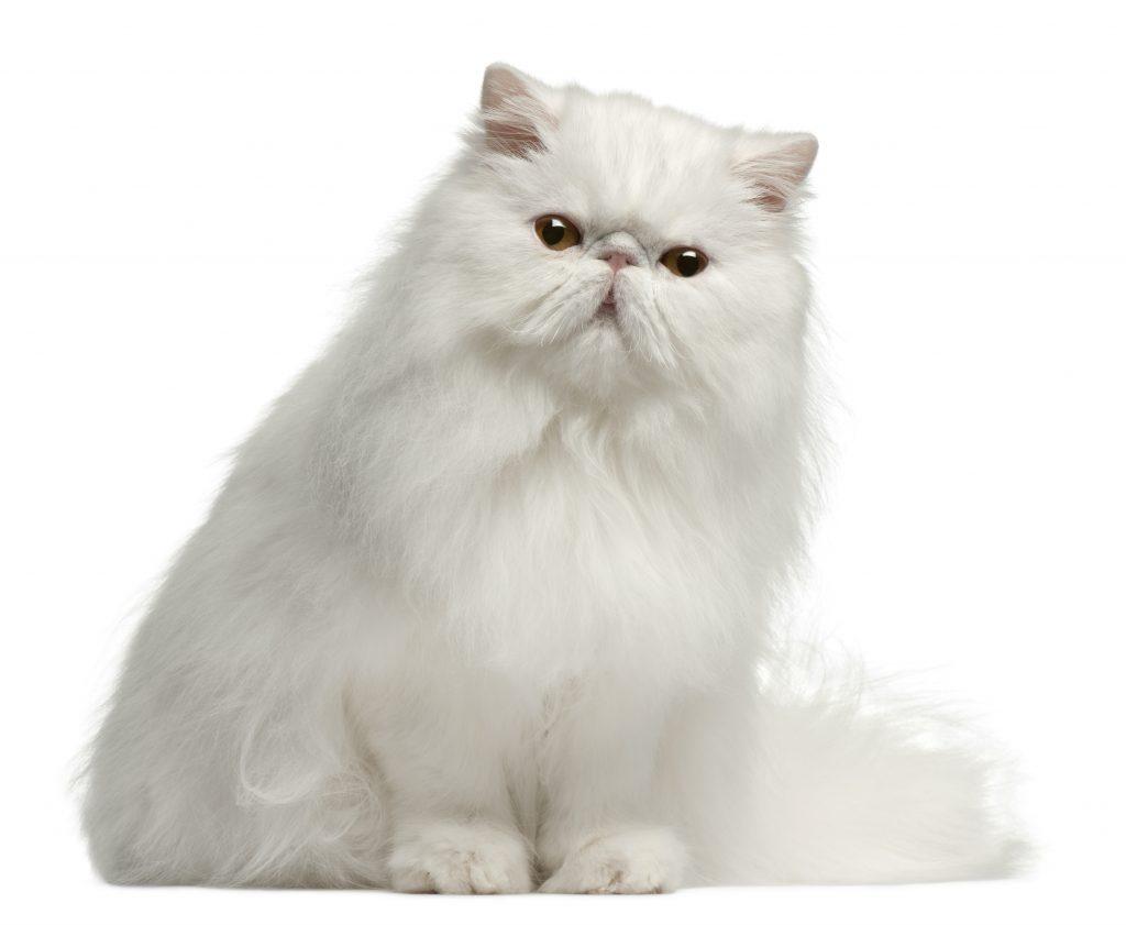 Meow-vember