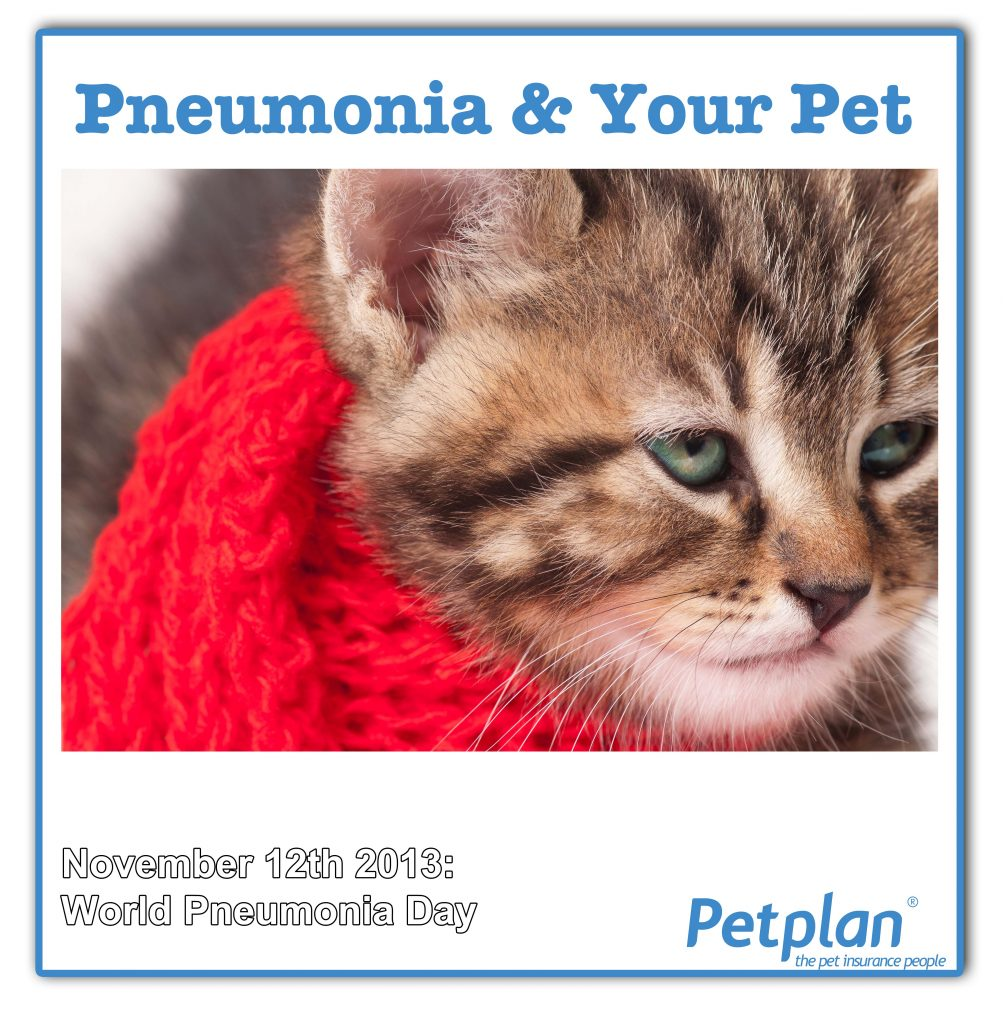 kitty cat pneumonia