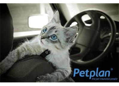 Cat-Car-Travel-398x288
