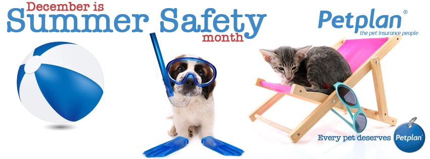 petplan header summer safety