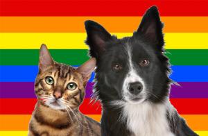 GLTB Dog and Dog Flag