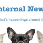 Internal Newsletter Header