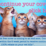 6WF Continue Cover Kitten