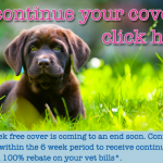 6WF Continue Cover Puppy