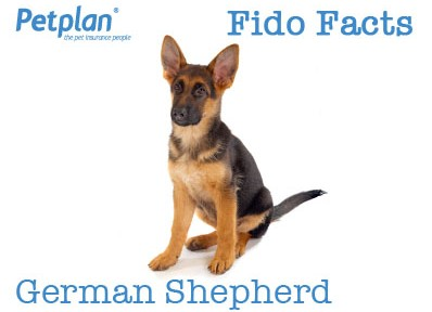 Fido Facts German Shepherd
