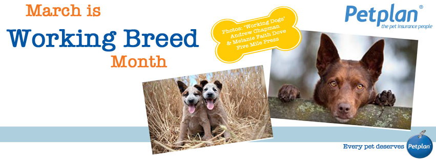 Working Breed Cover Photo