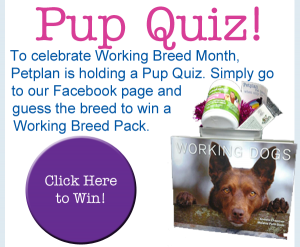 working dog pop quiz