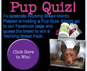 working dog pop quiz