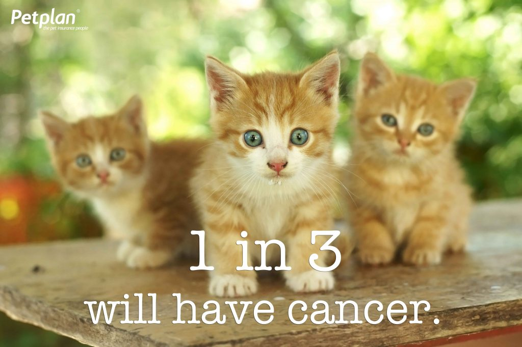 1 in 3 kittens cancer