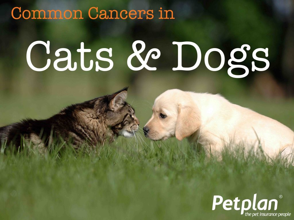 Common Cancers in Cats and Dogs