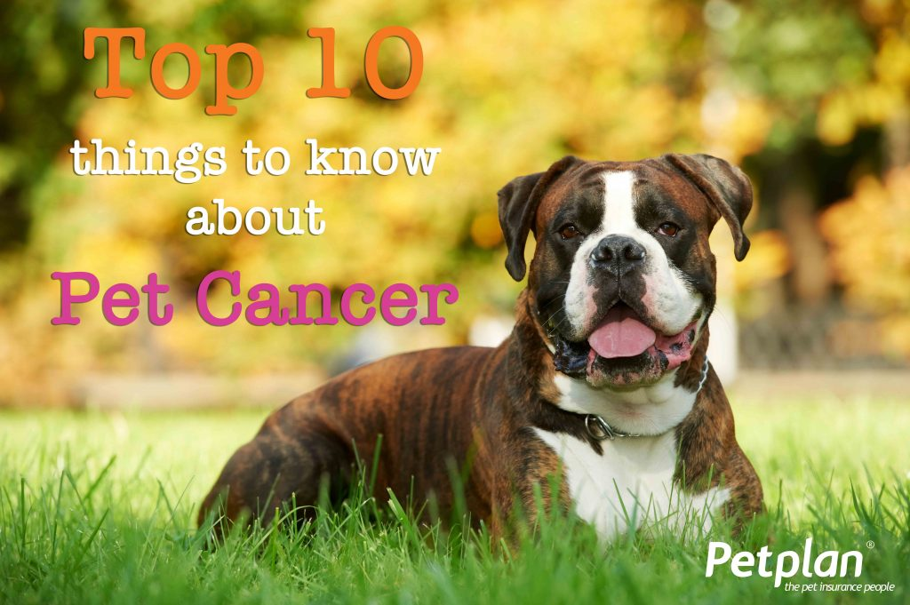Top 10 Things to Know about Pet Cancer