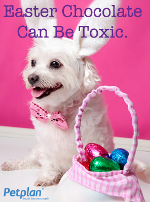 Easter Chocolate Can Be Toxic