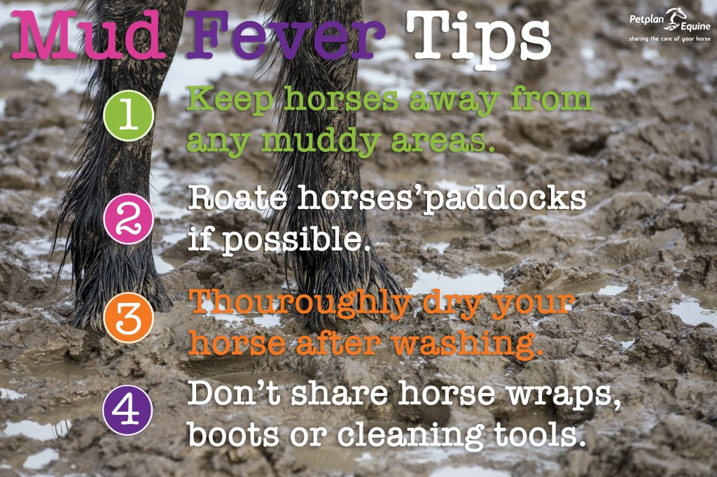 Mud Fever Tips