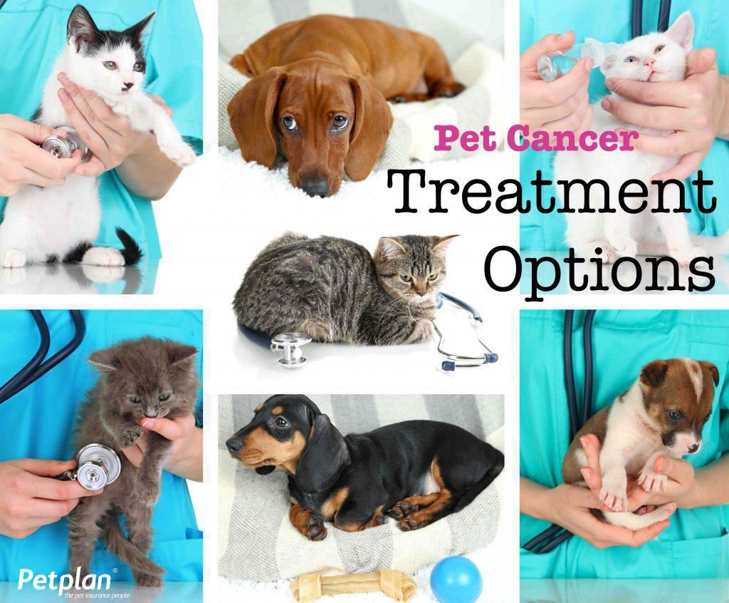 Pet Cancer Treatment Options