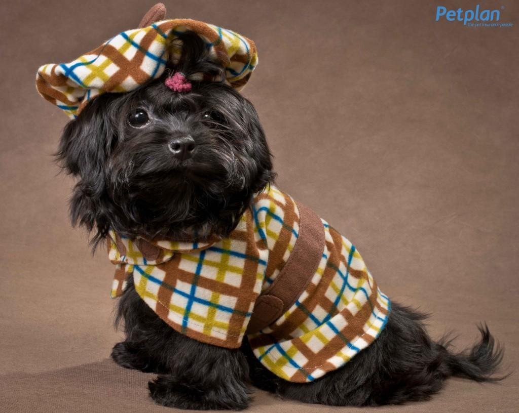 Dog in Tartan Petplan