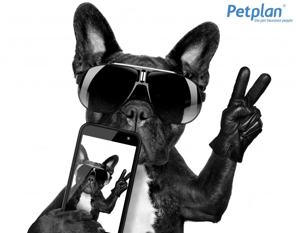 Petplan Social Media Dog