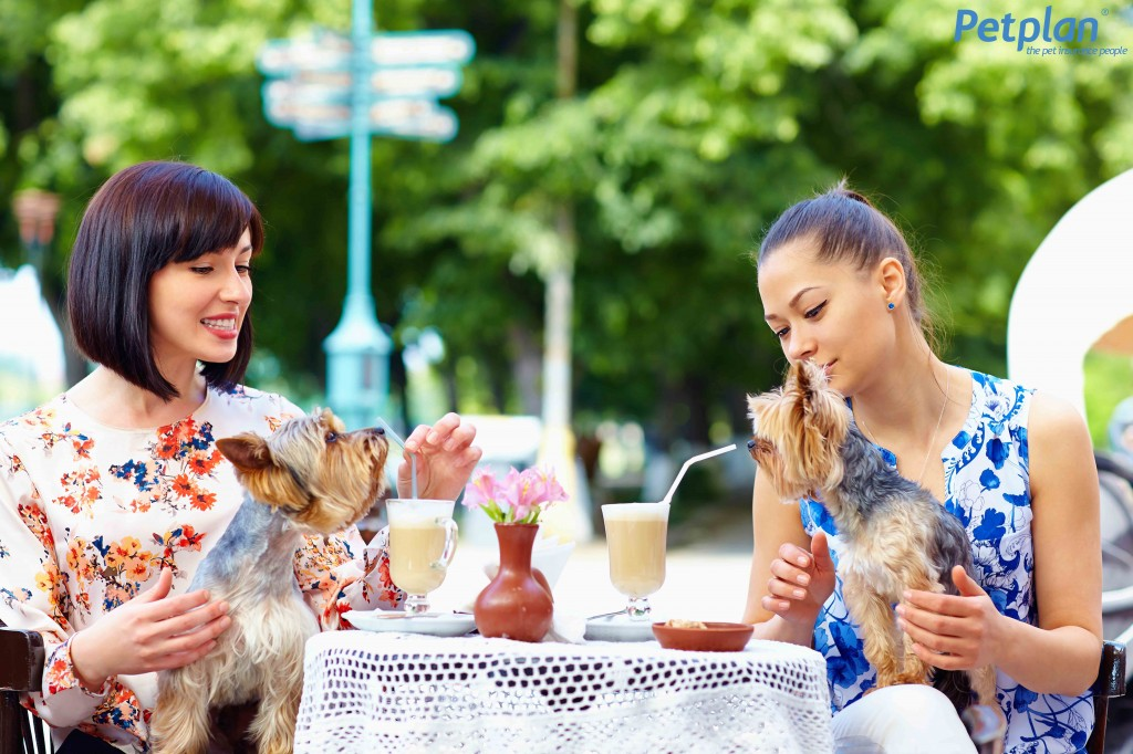 Women Dining with Dogs