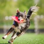Dog Frisbee Pet Insurance