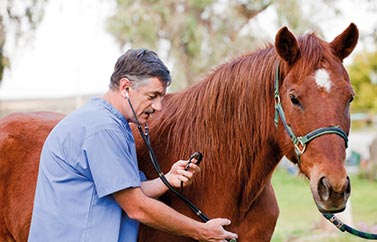 equine-insurance