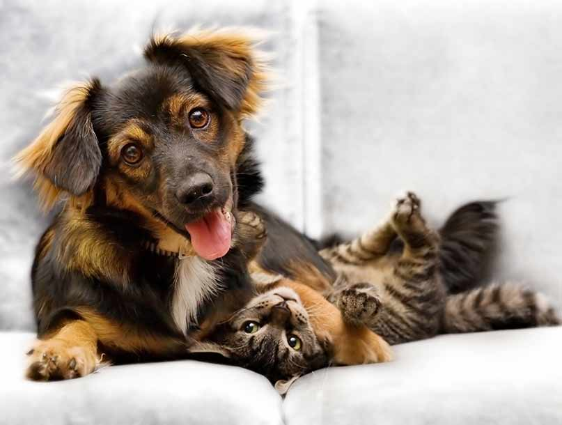 pet insurance dog cat