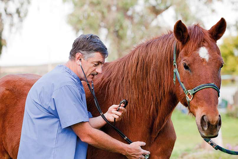 Image result for Horse Health