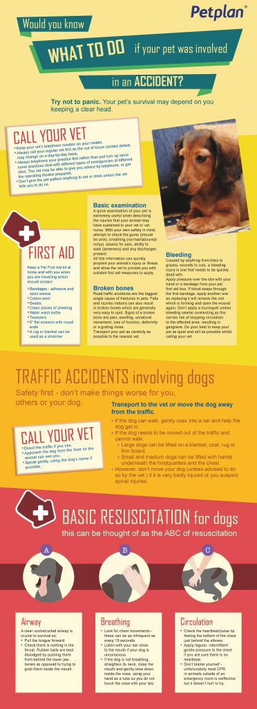 pet-insurance-australia-accident-infographic