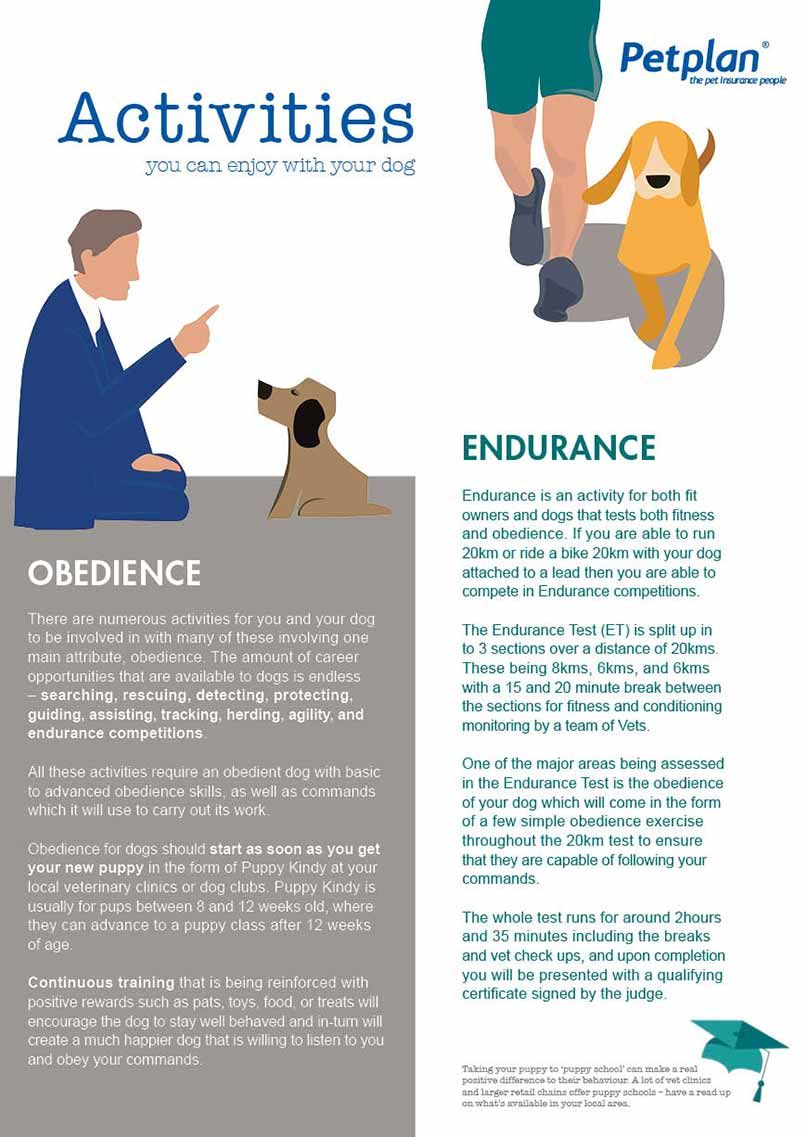 activities you can do with your dog