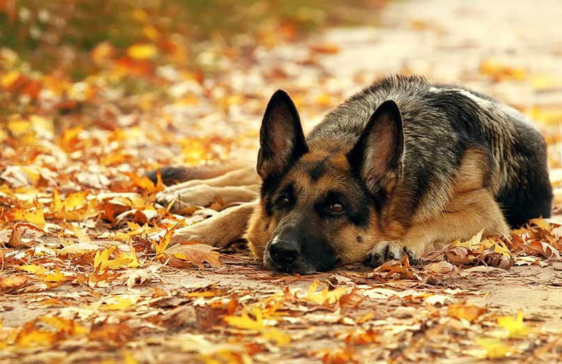 Pet Health Tips for Autum