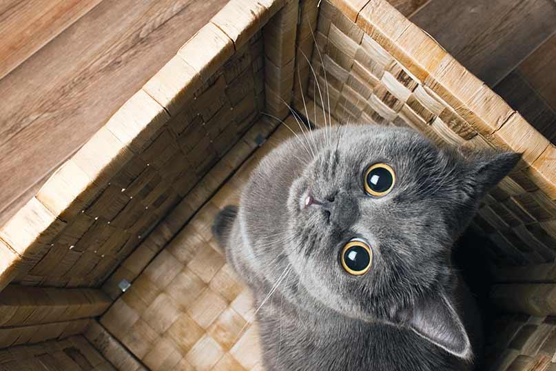 cat has trouble urinating